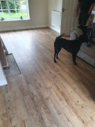 Dog checking out his new floor